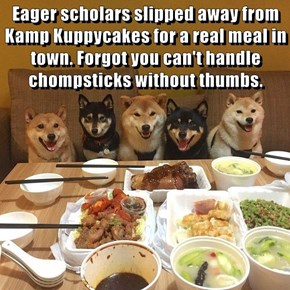 Eager scholars slipped away from Kamp Kuppycakes for a real meal in town. Forgot you can't handle chompsticks without thumbs.