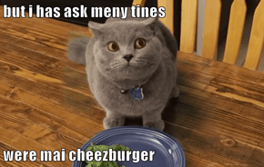 but i has ask meny tines  were mai cheezburger