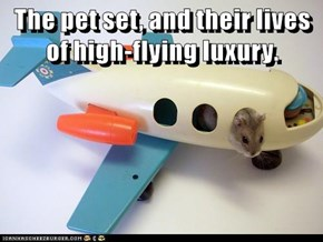 The pet set, and their lives of high-flying luxury.
