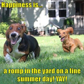 Happiness is...  a romp in the yard on a fine summer day! YAY!