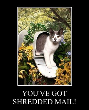 YOU'VE GOT SHREDDED MAIL!