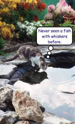 Never seen a fish with whiskers before