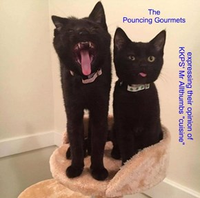 The Pouncing Gourmets