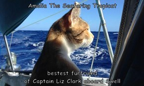 Amelia The Seafaring Tropicat  bestest furfriend                                                    of Captain Liz Clark aboard Swell