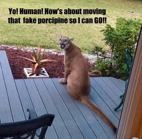 Yo! Human! How's about moving that  fake porcipine so I can GO!!
