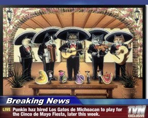 Breaking News - Punkin haz hired Los Gatos de Michoacan to play for the Cinco de Mayo Fiesta, later this week.