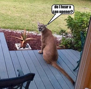 do I hear a  can opener?
