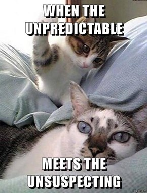 WHEN THE UNPREDICTABLE   MEETS THE UNSUSPECTING