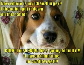 Now where is my Cheezburger?                                                               I thought I put it down                                                                        on this table!   GULP! I just KNOW he's  going to find it!!