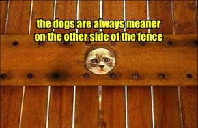 the dogs are always meaner on the other side of the fence