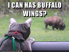 I CAN HAS BUFFALO WINGS?