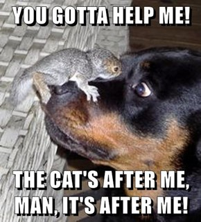 YOU GOTTA HELP ME!  THE CAT'S AFTER ME, MAN, IT'S AFTER ME!