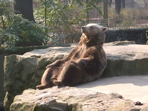 A Super Chill Brown Bear Gets the Photoshop Battle It Deserves