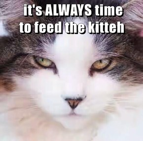 it's ALWAYS time                                           to feed the kitteh