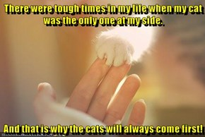 Cats Give Us Unconditional Love