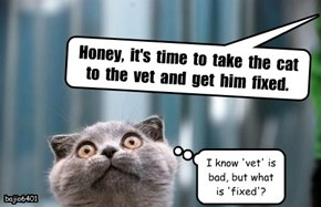 Honey,  it's  time  to  take  the  cat  to  the  vet  and  get  him  fixed.