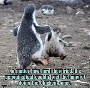 No  matter  how  hard  they  tried,  the  penguins  just  couldn't  get  the  hang  of  doing  the  Chicken  Dance.