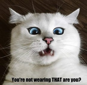 High Fashion Cat Questions Your Style Choices