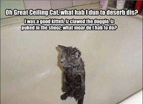 Oh Great Ceiling Cat, what hab I dun to deserb dis?