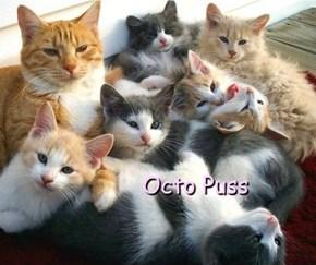 Octo Puss