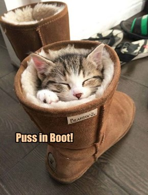 Puss in Boot!