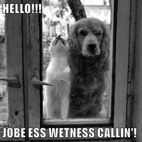 HELLO!!!  JOBE ESS WETNESS CALLIN'!