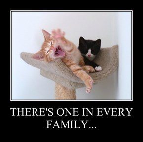 THERE'S ONE IN EVERY FAMILY...