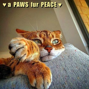 ♥ a  PAWS  fur  PEACE ♥