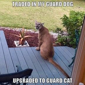 TRADED IN MY GUARD DOG  UPGRADED TO GUARD CAT