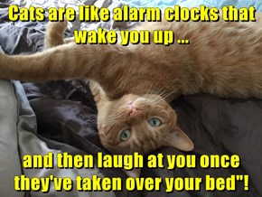 "Cats are like alarm clocks that wake you up ...  and then laugh at you once they've taken over your bed""!"