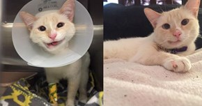 Duchess the Smiling Rescue Cat Has Defied All Odds