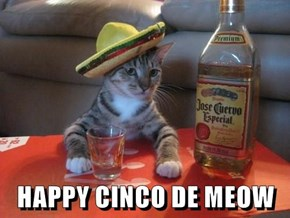 HAPPY CINCO DE MEOW
