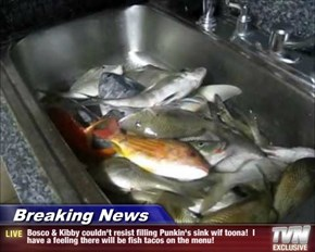 Breaking News - Bosco & Kibby couldn't resist filling Punkin's sink wif toona!  I have a feeling there will be fish tacos on the menu!