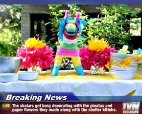 Breaking News - The skolars get busy decorating with the pinatas and paper flowers they made along with the shelter kittehs.