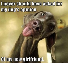 I never should have asked for my dog's opinion  Of my new girlfriend.