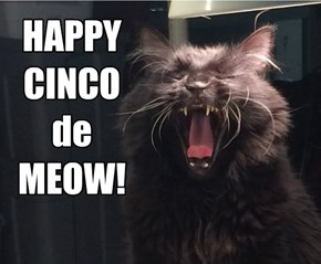 HAPPY CINCO de MEOW!