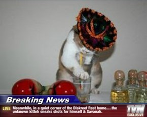 Breaking News - Meanwhile, in a quiet corner of the Diskreet Rest home.....the unknown kitteh sneaks shots for himself & Savanah.