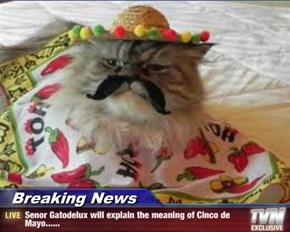 Breaking News - Senor Gatodelux will explain the meaning of Cinco de Mayo......
