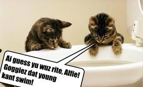 Ai guess yu wuz rite, Alfie! Goggiez dat young  kant swim!