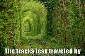 The tracks less traveled by