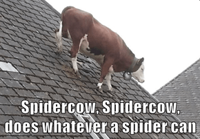 Spidercow, Spidercow, does whatever a spider can