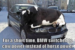 For a short time, BMW switched to cow power instead of horse power