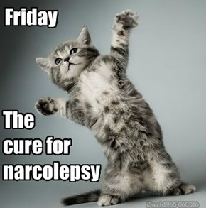 The cure for narcolepsy