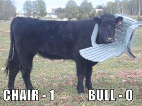 CHAIR - 1             BULL - 0