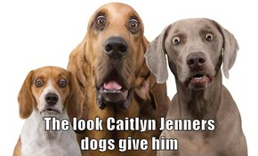 The Look Caitlyn Jenners Dogs Give Him