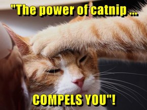"""""""The power of catnip ...  COMPELS YOU""""!"""