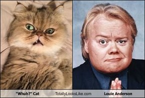 """Whuh?"" Cat Totally Looks Like Louie Anderson"