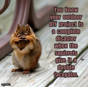 You  know  your  outdoor  DIY  project  is  a  complete  disaster  when  the  squirrels  give  it  a  double  facepalm.