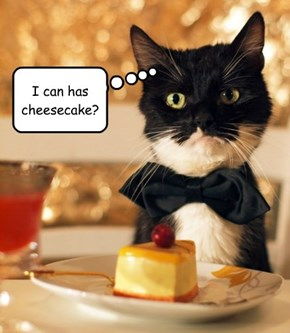 I can has cheesecake