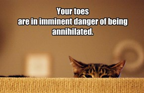 Never wiggle your toes around kitteh!